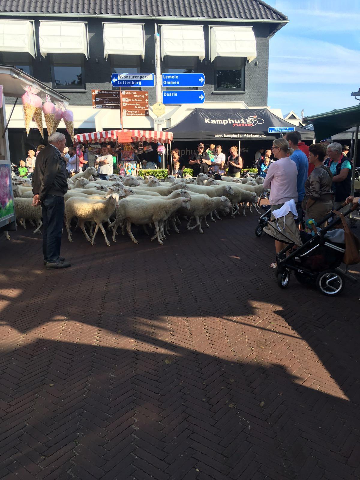 Schapenmarkt 2016